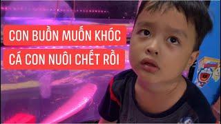 """Con trai Khương Dừa buồn thảm khi """"cá cưng"""" nuôi hai năm tự nhiên chết, tội nghiệp quá!!!"""