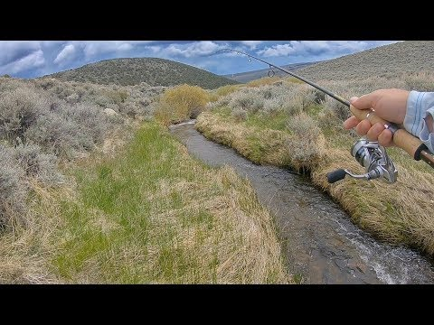 Catching Big Fish In A TINY Creek!