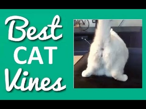 #3 Best and Cutest Cat Vines Compilation 2014/2015