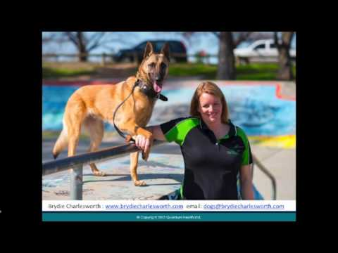 Animal Behaviour Webinar Dogs