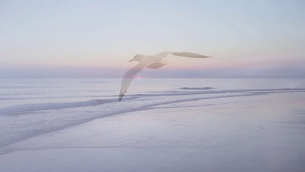 SnackbarDreamer - Sunday Seagulls (TR-8S, TB-03, Volca Keys, Microkorg...)