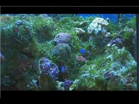 Saltwater fish tanks beginner 39 s guide to saltwater fish for Best fish tanks for beginners