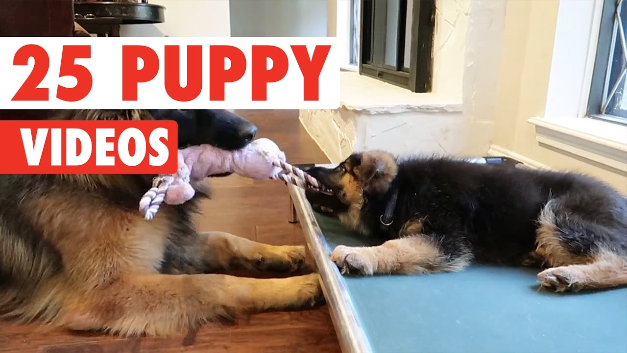 25 Cute Puppy Videos Compilation 2017 Youtube