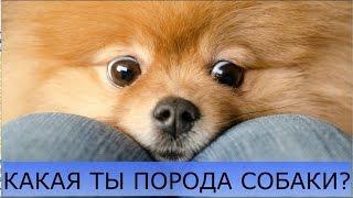 Какая ты порода собак?