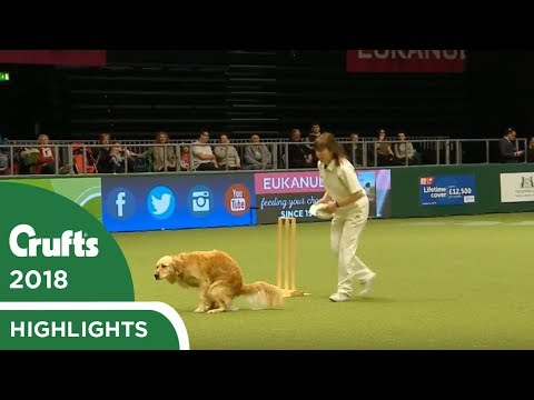 Heelwork to POOsic - Dog takes a dump at Crufts 2018