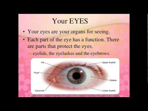the different parts of the eye and their functions There are 6 extrinsic muscles of the eyes which are responsible for the the are six muscles of the eyes responsible for movement of the eye these muscles function in agonist and antagonist pairs enabling these muscles are called extrinsic eye muscles because their origin points are.