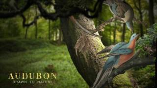 Audubon: Drawn to Nature at the Indianapolis Museum of Art