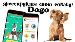 Как дрессировать собаку? Полезное приложение Dogo