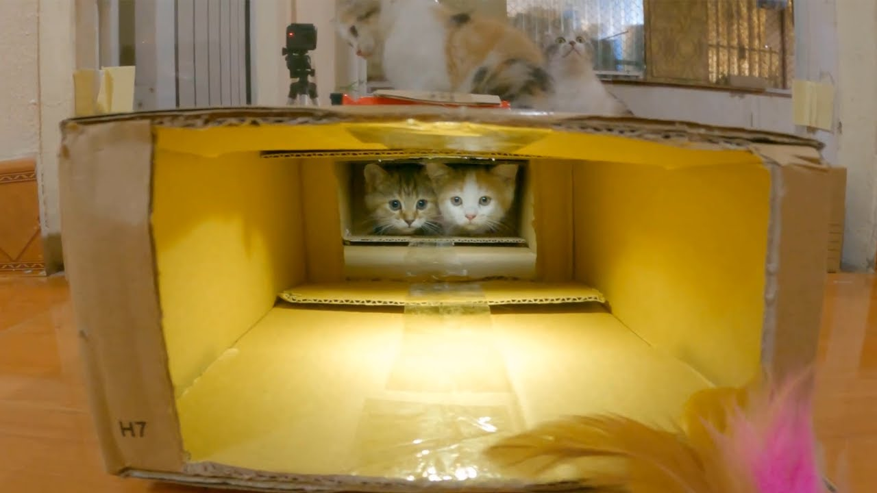 The kittens commando crosses the obstacle tunnel.