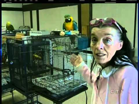Polly want a senior care home?