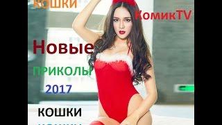 Новые приколы 2017 КОШКИ кошки
