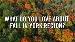 The best fall moments in York Region #loveyr