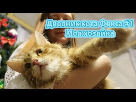 Дневник кота все части по порядку в стихах