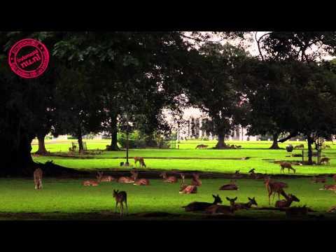 Bogor | Tourism