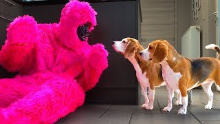 Dogs vs. Funny Pink Monkey Prank : Funny Dogs Louie and Marie