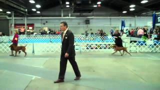 Best Of Breed Class- Louisville Dog Show,ky