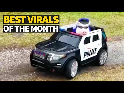 Top Viral Videos