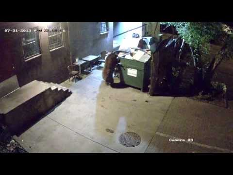 Hungry Bear Wants Takeout, Takes Entire Dumpster From Restaurant (VIDEO)