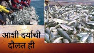 अशी दर्याची दौलत ही/Ashi Daryachi Doulat hi/ Extreme deep sea fishing/ Mackerel बांगडा fish sea food