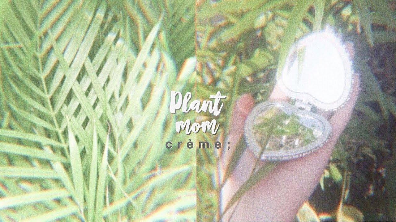 plant mom ♡ ࿐ྂ