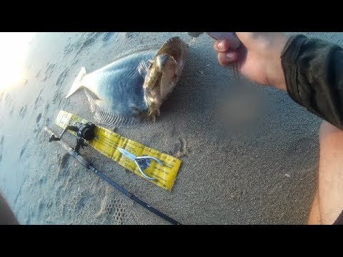 "33"" California Halibut Shore Fishing(Bolsa Chica,CA)"