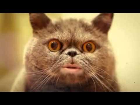 картинки люблю тебя котенок
