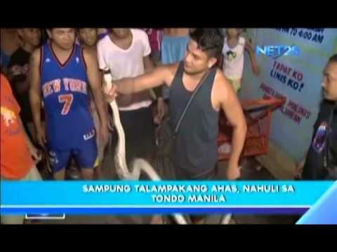 Snake caught in Tondo, Manila