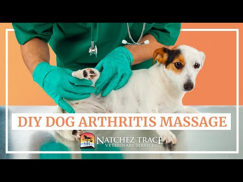 hqdefault - Back Pain Labrador Retrievers