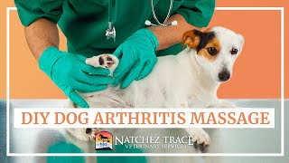 Easy DIY Dog Arthritis Massage at Home  Marc Smith DVM