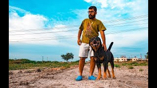 GoPro camera on Rottweiler in India
