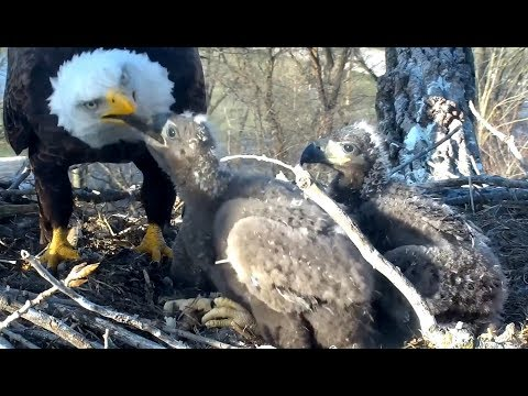 A date for Mom and THREE breakfasts for the kids! Decorah Eagles. 06.50 / 29 April 2018