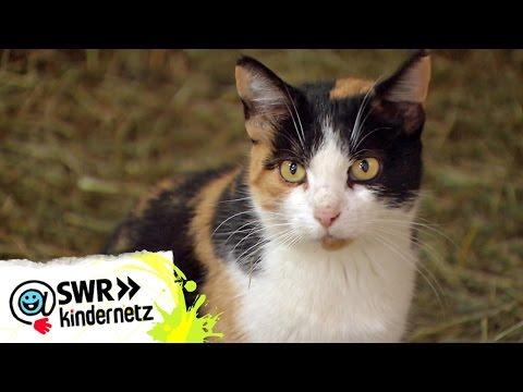 Die faszinierenden Sinne der Katzen | OLI's Wilde Welt | SWR Kindernetz