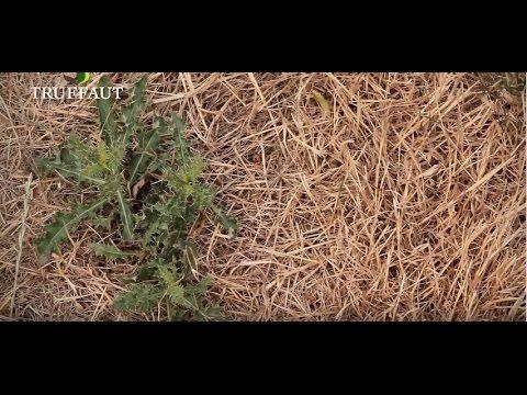 Gazon Jaune Et Sec Que Faire Jardinerie Truffaut Tv Youtube