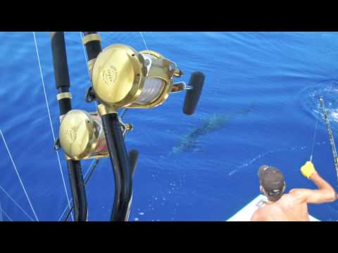 Extreme Fishing In Maui. Catching A Marlin.