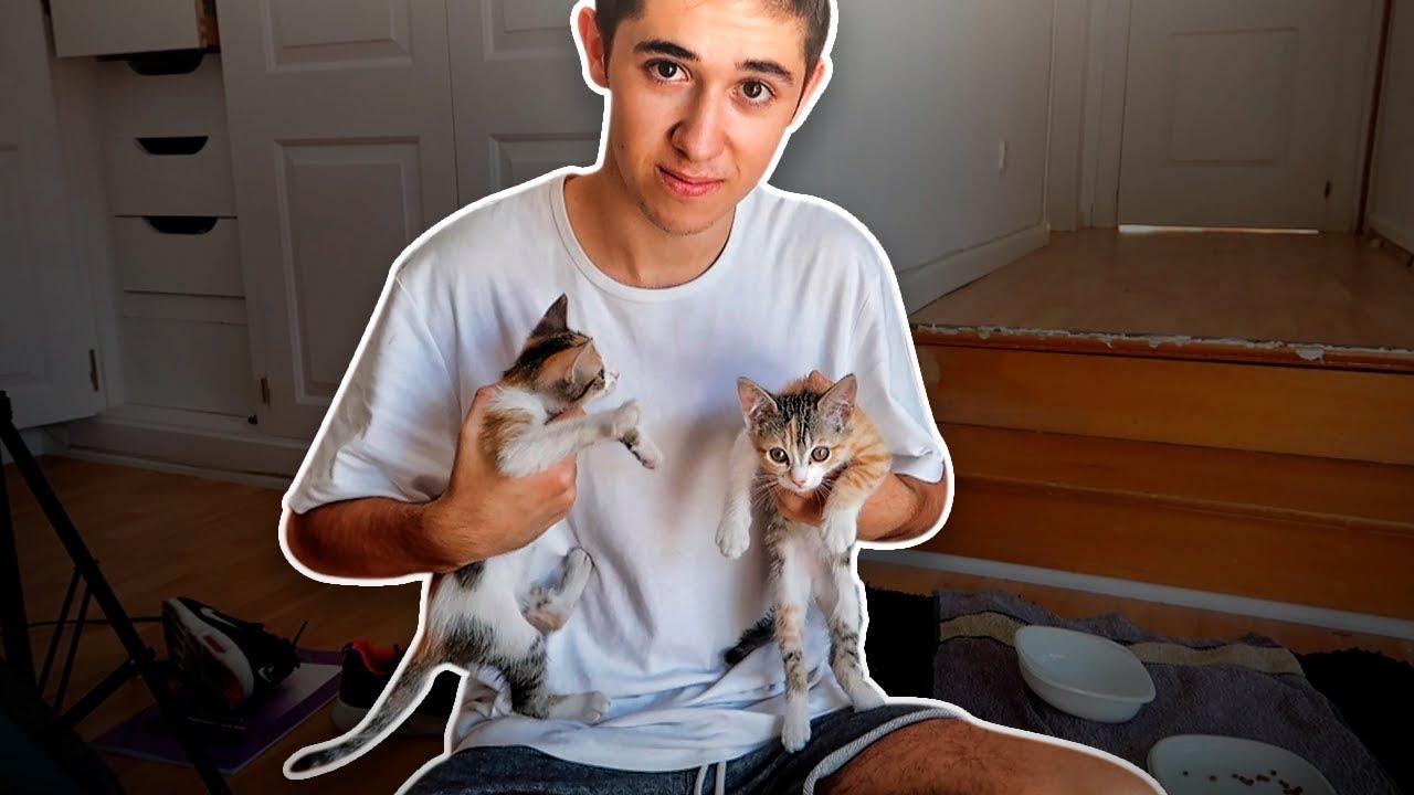 cmo-reacciona-un-gato-al-reencontrarse-con-su-hermana-perdida-shooter