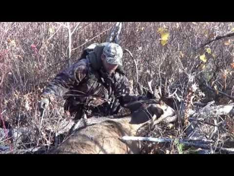 Hunting BC 2015 Mule Deer