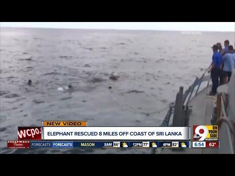 Elephant rescued 8 miles off coast of Sri Lanka