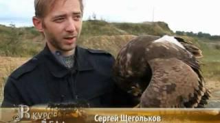 Охота с орлом репортаж телеканала