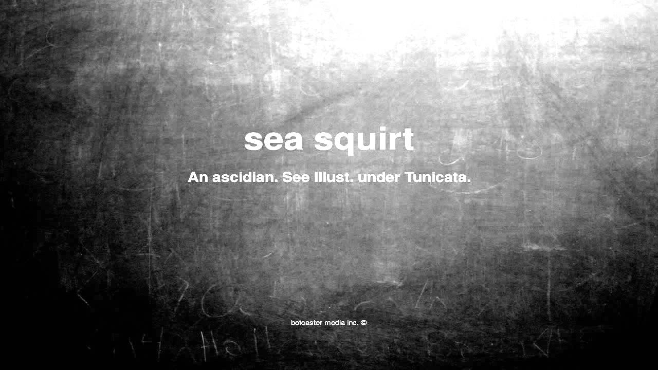 What Does Sea Squirt Mean - Youtube-4174