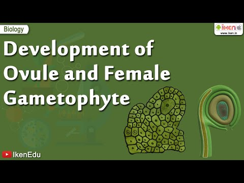 Biology Of Plants | Learn About Ovule and Gametophyte