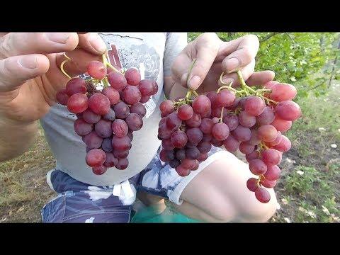 Проверенные-зимние укрытия винограда и инжира.