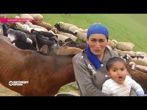 видео: Таджикская женщина-пастух: коня на скаку остановит