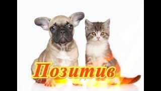 Самые смешные кошки собаки Fanny animals Создай себе хорошее настроение