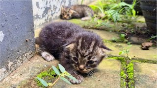 Tiny Scared Kittens Crying For Mother Cat, Where Is Mother Cat?