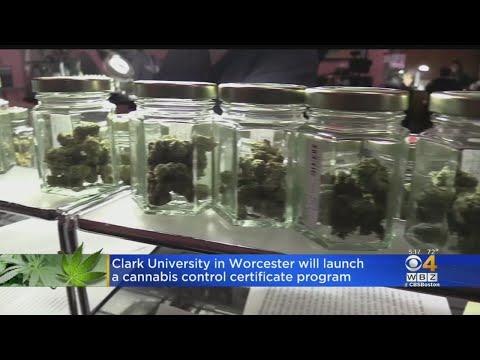 U S  Universities Offering Cannabis-Focused Graduate