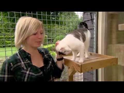 Kattenpension Shakira: Internationale kattendag op RTV Drenthe weerbericht