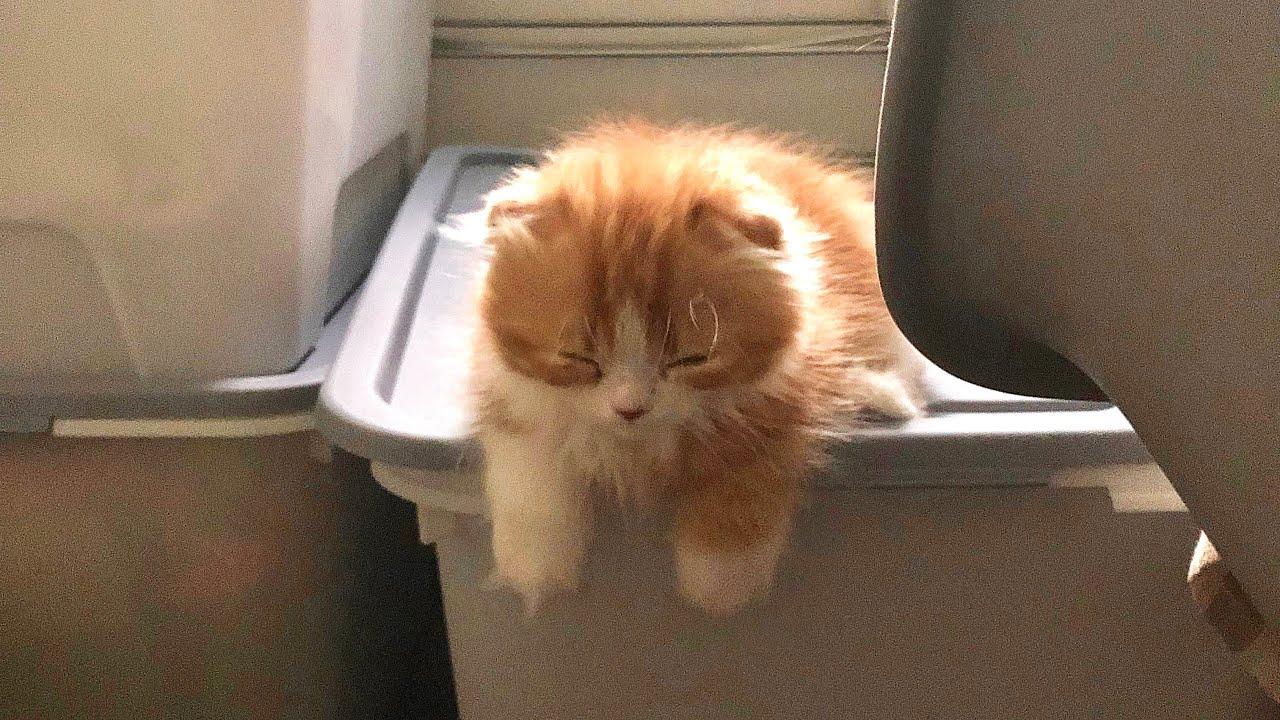 전국을 들썩이게 했던 귀여운 아기고양이