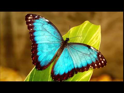 The Butterfly Effect   Butterflies Among the