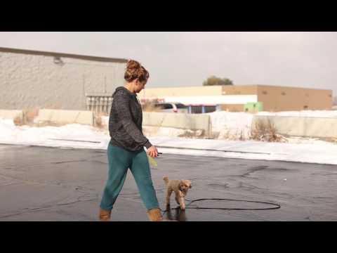 TYD60 Moment- How to Train a Small Dog With an Electric Collar- Ty the Dog Guy