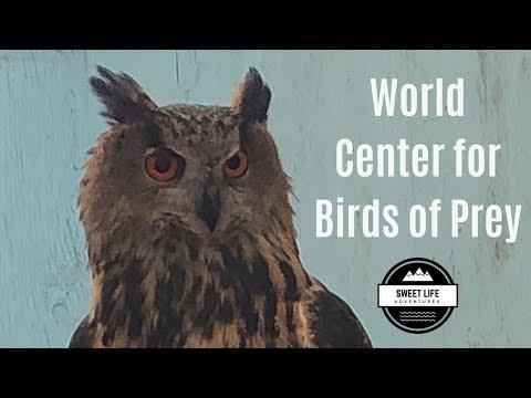 World Center For Birds Of Prey In Boise Idaho | Eagles, Falcons, Hawks, Owls, Condors, Birding